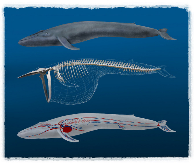 whales and dolphins justin hofman scientific